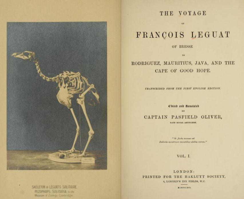 dodo-solitaire