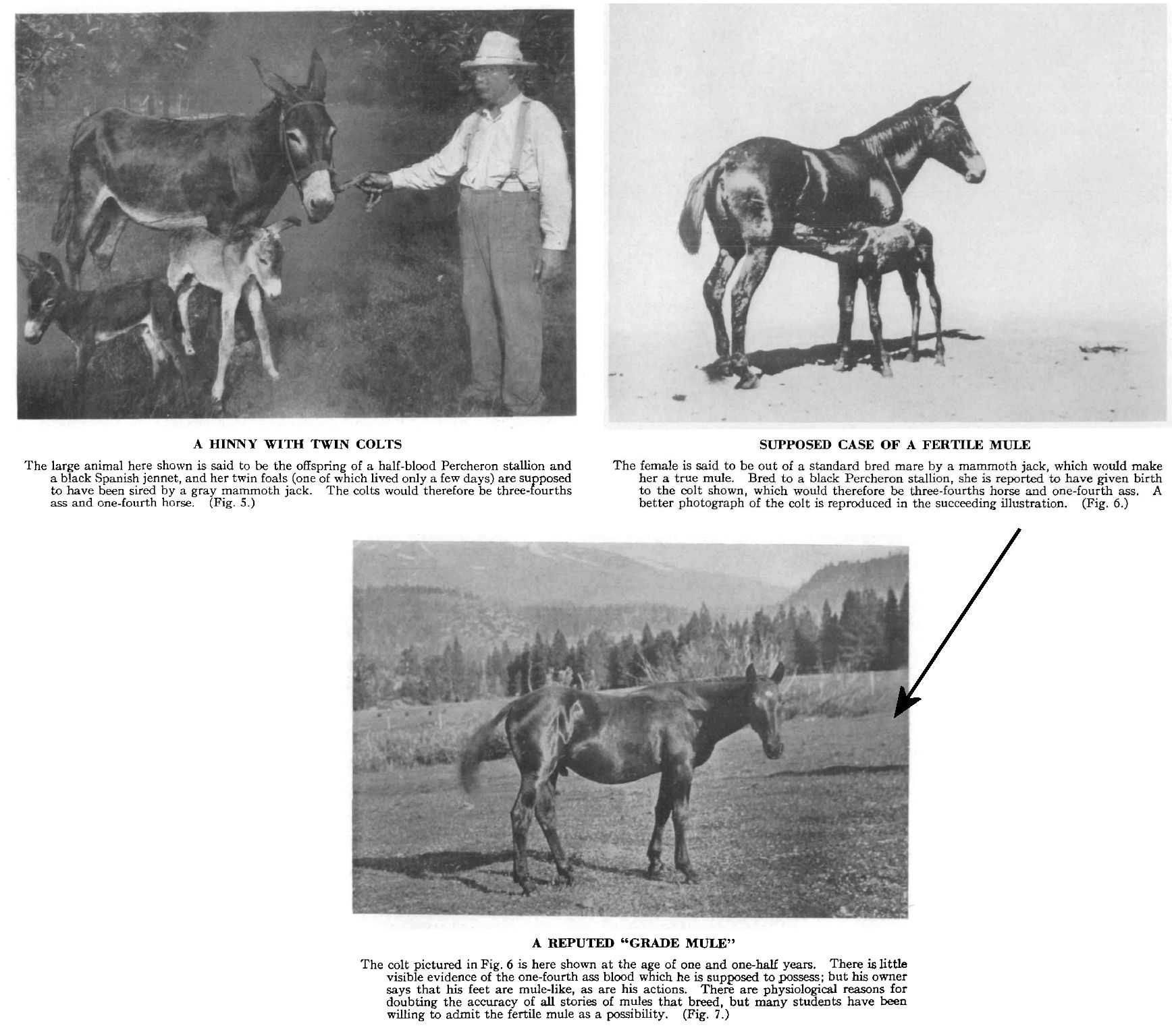 Hybrid Equines