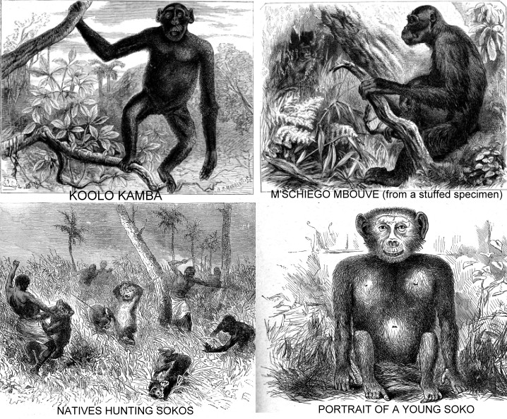 Above images of the Yerkes Humanzee