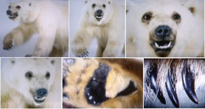 Hybrid Bears