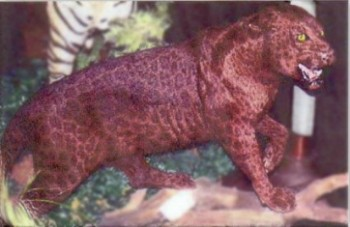 Red leopard taxidermy ...
