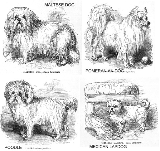 DOG BREEDS IN 1853