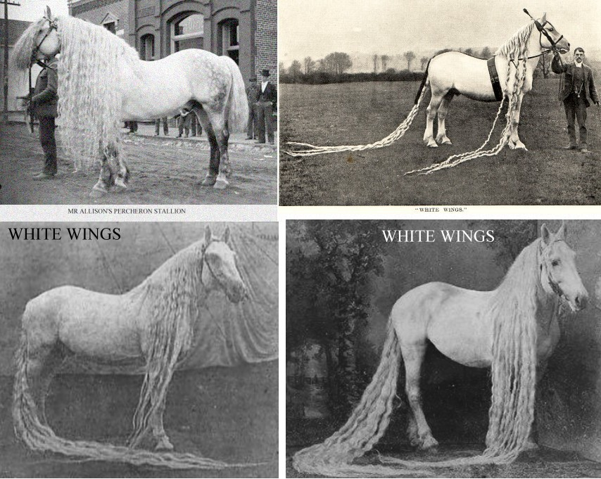a history of the horses and how they grow Horse's teeth grow throughout their  our first use for horses was as food historians believe they were first used as  olympic equestrian illustrated history.