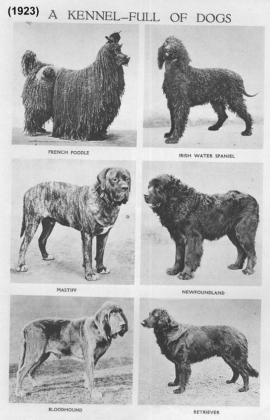 DOG BREEDS IN THE 1920s