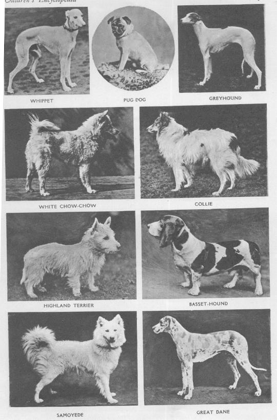 Dogs That Are Extinct Extinct Dog Breeds