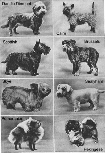 Dog Breeds In 1937