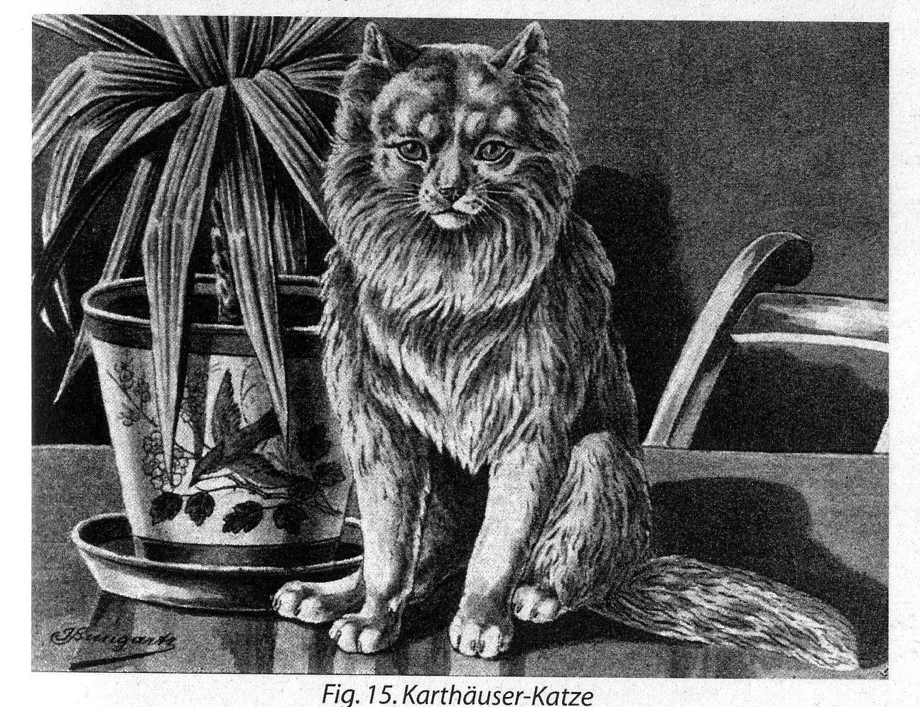 Atemberaubend Katze Die Draht Kaut Bilder - Die Besten Elektrischen ...