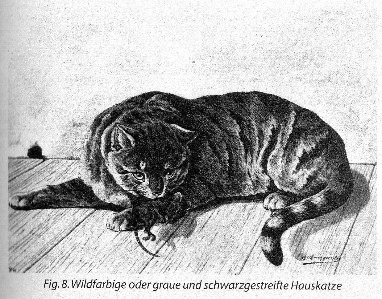 bissigkeit bei katzen