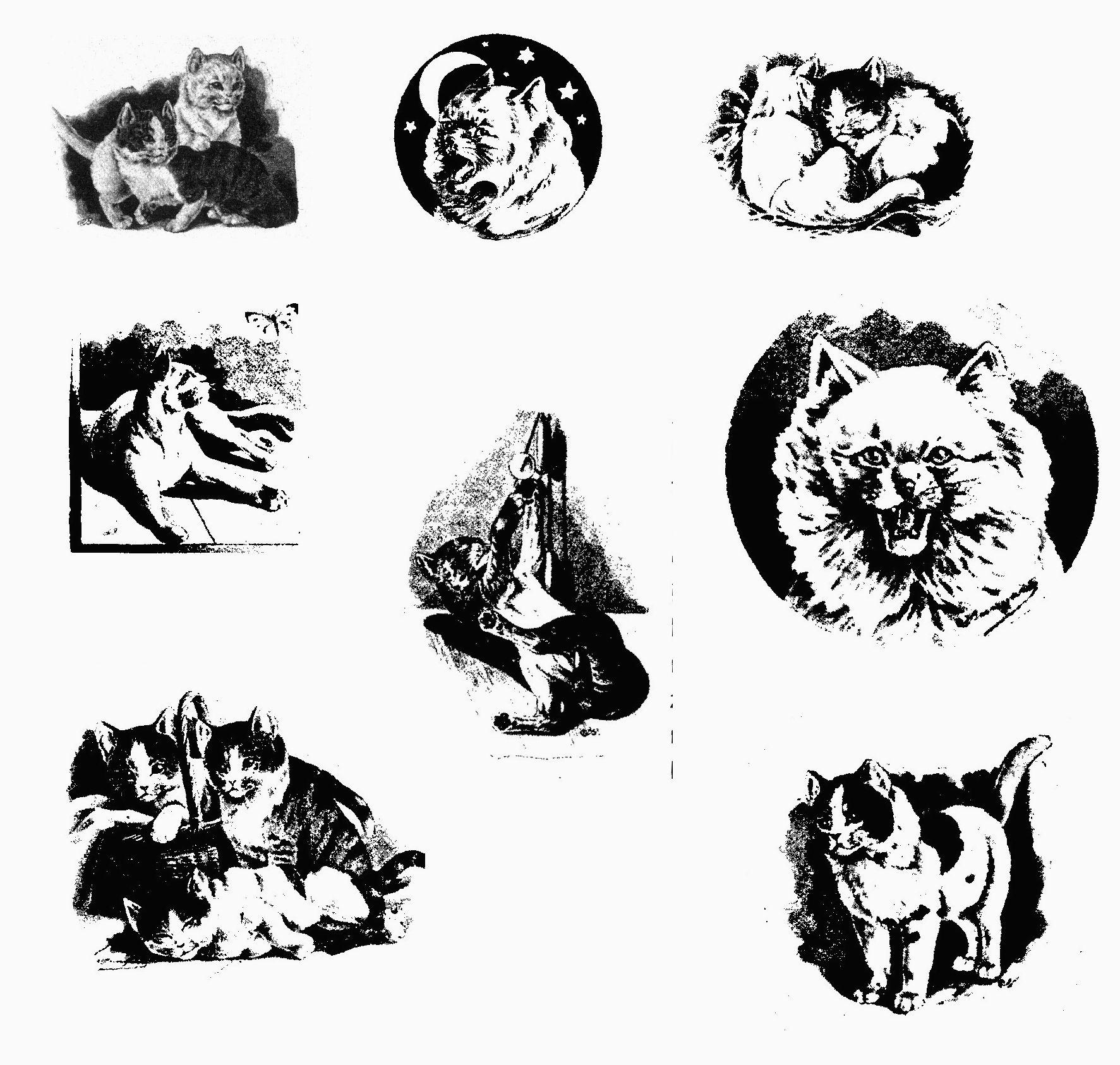 betty sieben katzenleben