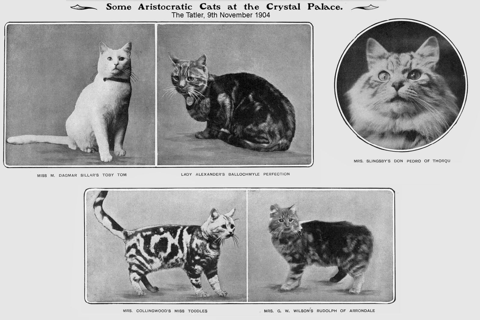 crystal palace cat show