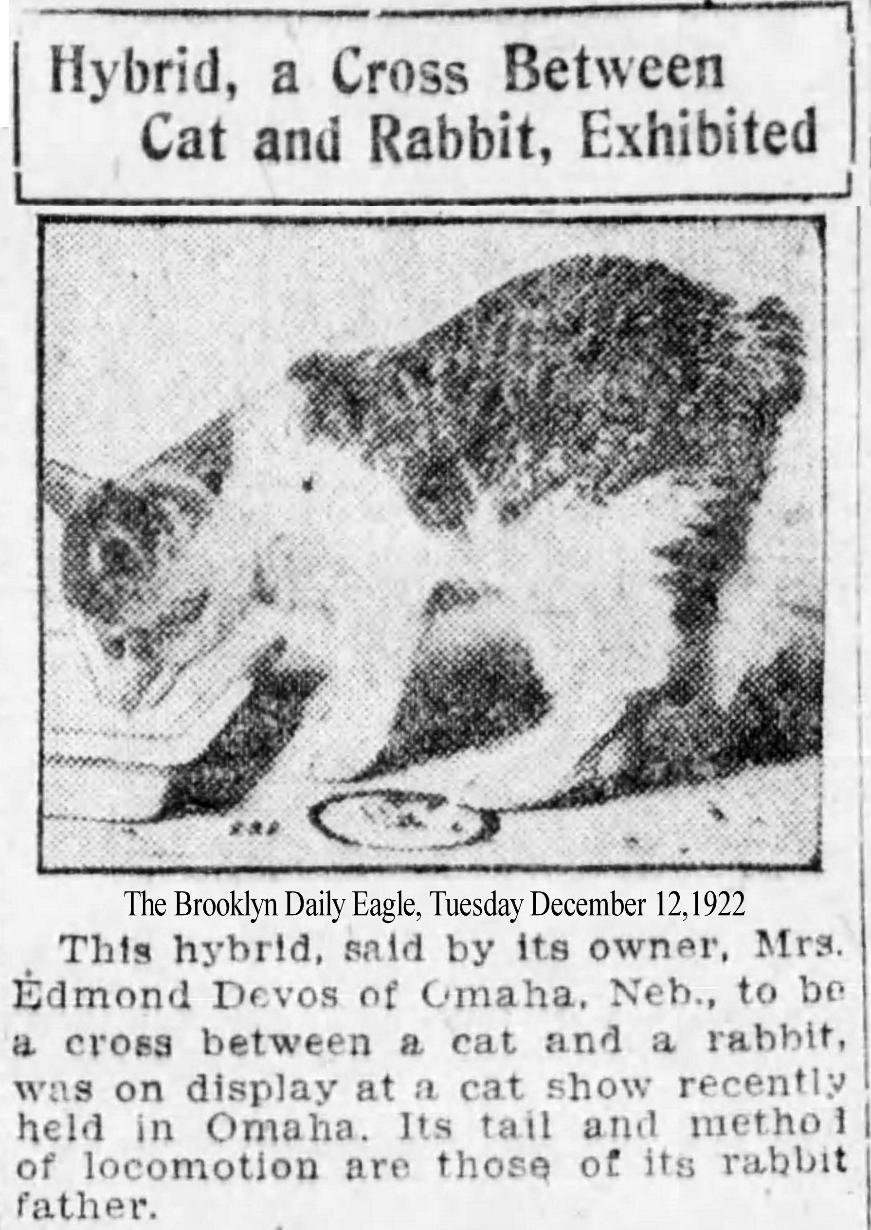 1934 Culver Citizen Runs Article By Samuel E Perkins Iii Formerly President Of Indiana Audubon Society Describing 3 Strange Kittens At Morgan County