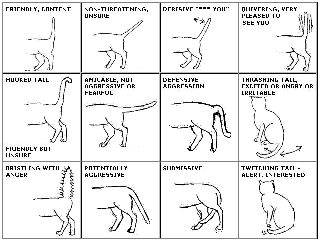 Cat Chart [Pic] ( messybeast.com )