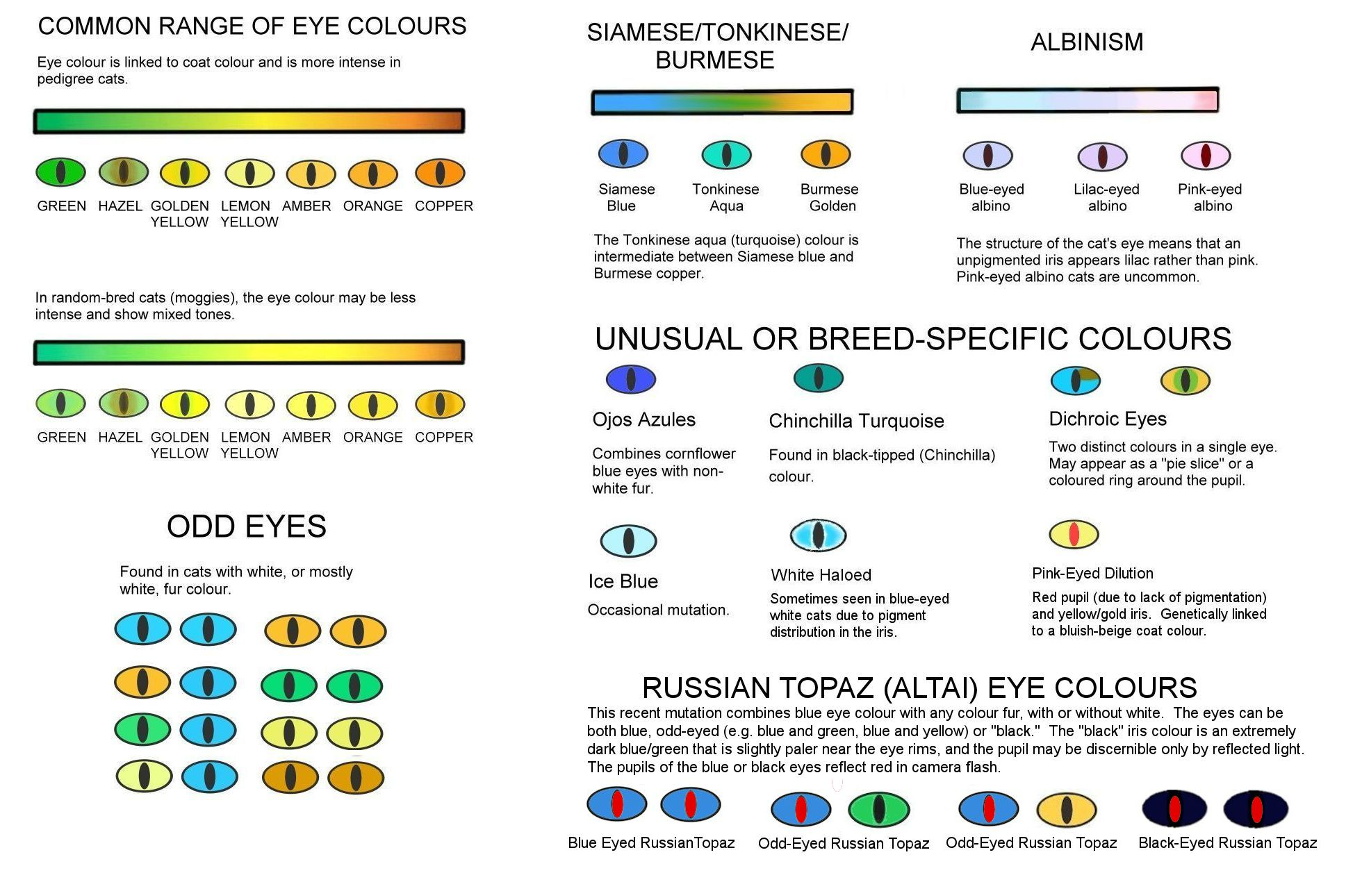 Cat Eye Color Chart Keninamas