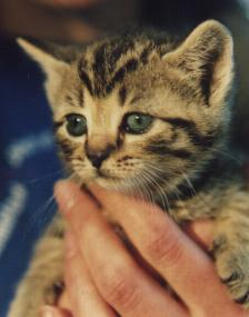 Prevent Further Damage By Finding The Cause Of Injury If Mother Is Harming Her Kittens They Will Need To Be Hand Reared