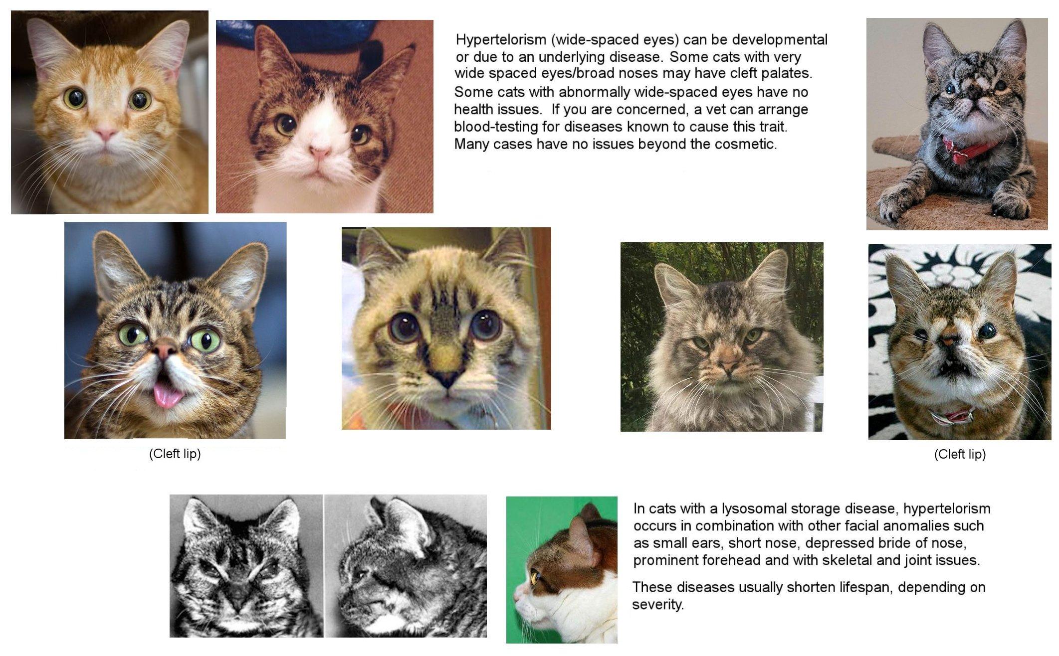 Feline Medical Curiosities Eyes