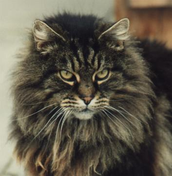 taby black personals Tabby cats checks - tabby cats are some of the prettiest and friendliest felines around proud and cunning, they're also feisty and playful and love to.
