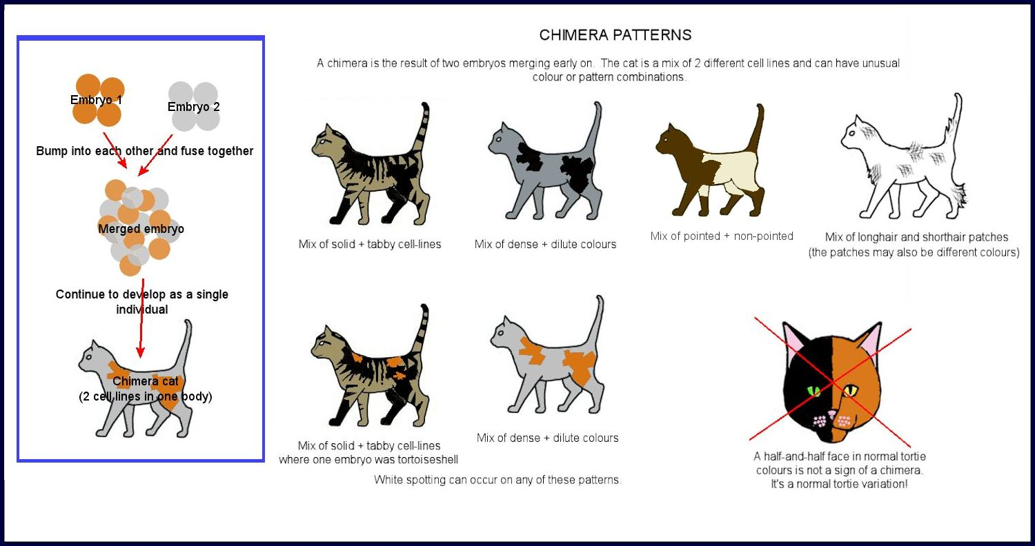 Colour and pattern charts cat colours diagram chart nvjuhfo Images