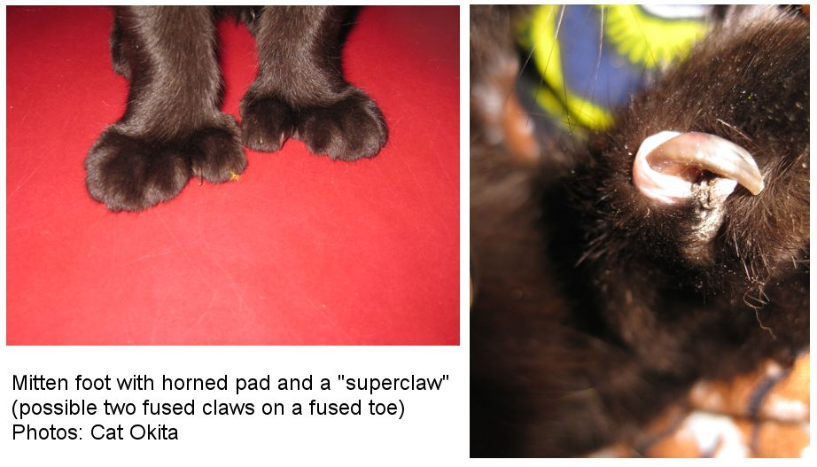 Horned Paws