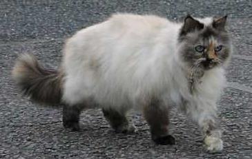 Pedigree Shelter Cats Amp Pedigree Lookalikes