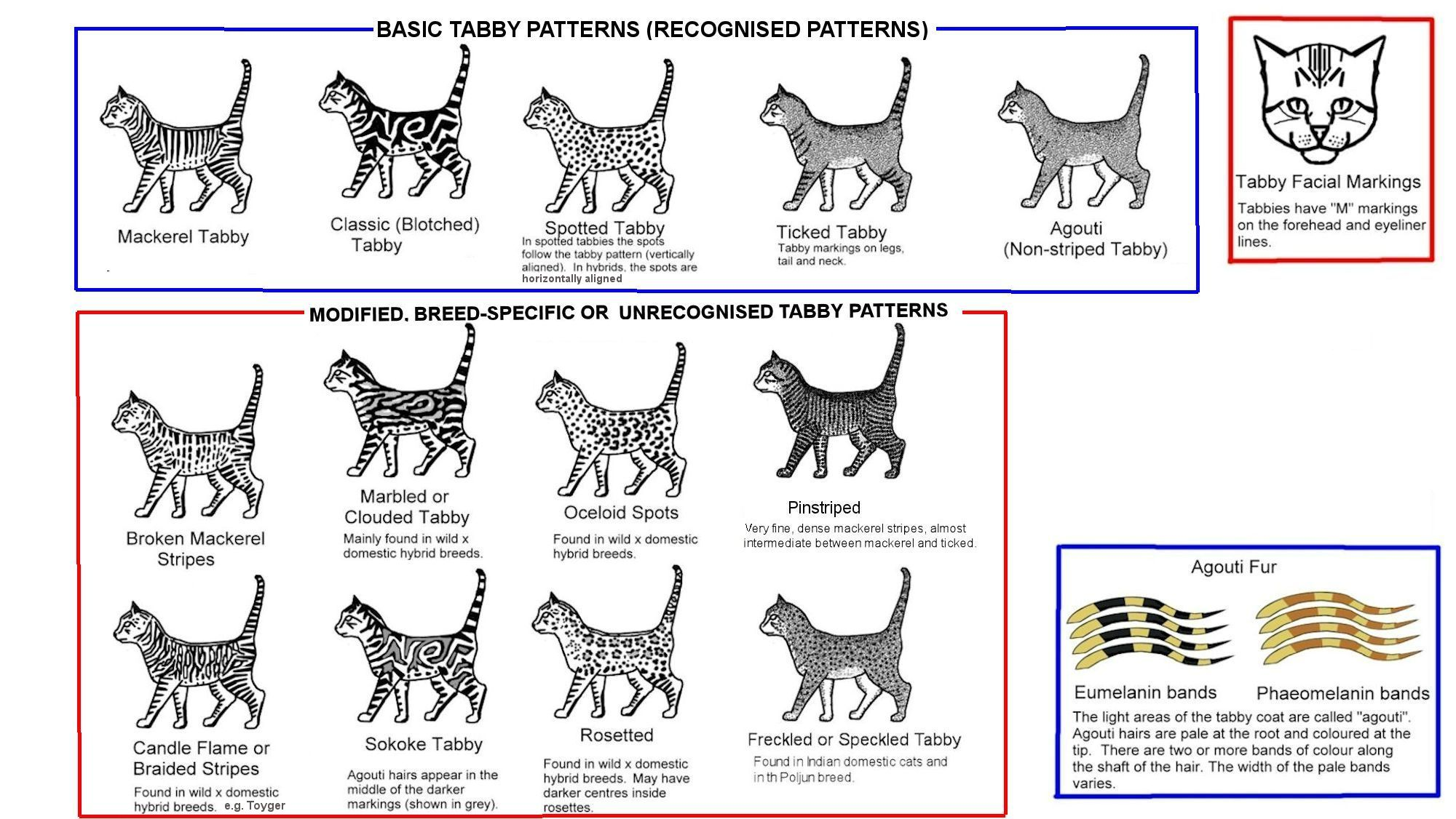 Cat Color Patterns Awesome Design Inspiration