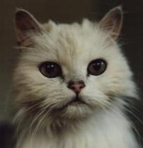 Longhair Cats